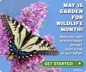 May is Garden for Wildlife month. Certify your yard today!
