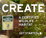 Create a certified wildlife habitat today