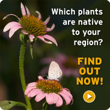 Discover which plants are native to your region