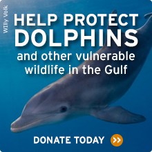 Help protect dolphins and other vulnerable wildlife. Donate now!