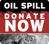 Oil spill - donate now