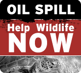 Help Wildlife Impacted by the BP Oil Spill