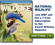 Join NWF and get a one year subscription to our magazine!
