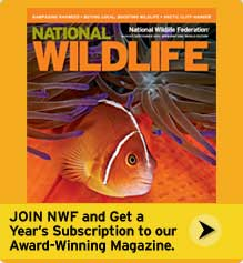 Join NWF and get a free subscription to National Wildlife magazine!