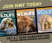 Join NWF today and get a 1 year subscription to National Wildlife magazine