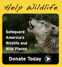 Donate today and help safeguard wildlife!