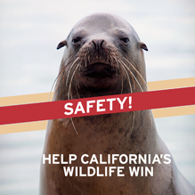 Help Wildlife Win 49ers