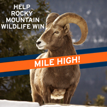 Help Wildlife Win Broncos