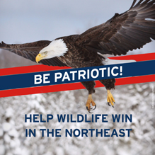 Help Wildlife Win Patriots