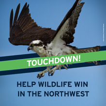 Help Wildlife Win Seahawks