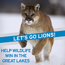 Help wildlife in Great Lakes win