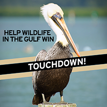 Help wildlife in the gulf win