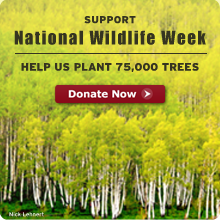 Help NWF plant 75,000 trees. Donate Now!