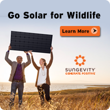 Go solar for wildlife today!