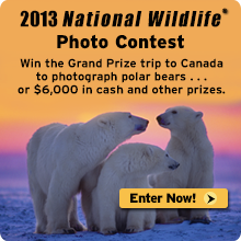 Enter the 2013 photo contest today!