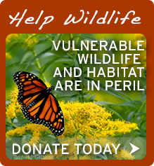Help wildlife by donating today!