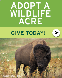 Adopt a Wildlife Acre today!