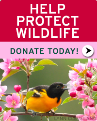 Donate to NWF today and help wildlife!