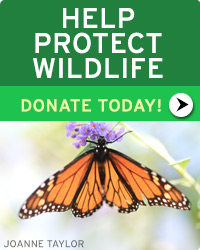 Help Protect Wildlife! Donate Toda!