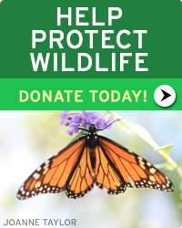 Help Protect Wildlife! Donate Today!