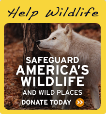 Help protect wildlife. Donate today!