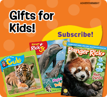 Subscribe to Ranger Rick Magazines today!