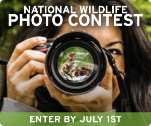 Enter the National Wildlife Photo Contest!