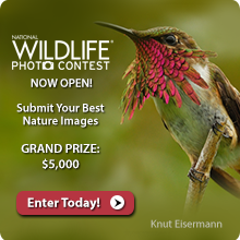 Enter the National Wildlife Magazine Photo Contest
