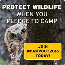 Happy Campers Protect Wildlife! Pledge to Campout today!
