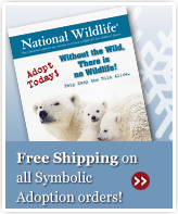Free Shipping on all Symbolic Adoptions!