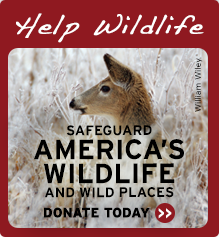 Help Wildlife Gift Deer