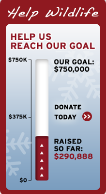 Help wildlife by helping us reach our goal!