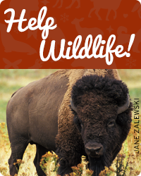 Help Wildlife Today!