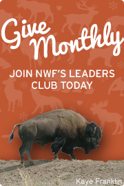 Give Monthly and Become an NWF Leader!