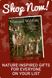 Shop now for nature-inspired gifts!