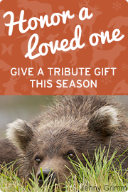 Honor a loved one with a gift to the National Wildlife Federation